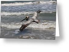 Pelican Soaring  Greeting Card