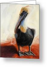 Pelican Study Greeting Card