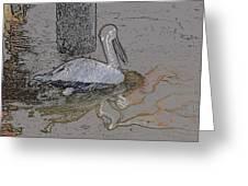 Pelican Swim IIi Color Pencil Greeting Card