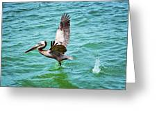 Pelican Taking Flight Greeting Card