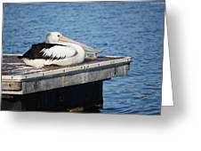 Pelican Taking Time Out 691 Greeting Card