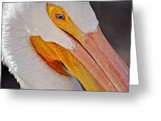 Pelican Twist Greeting Card