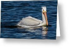 Pelican Wake Greeting Card