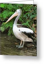 Pelican With A Bird Park In Bali Greeting Card