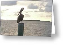 Pelican Zen Greeting Card