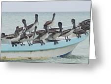 Pelicanos Greeting Card