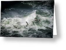 Pelicans And Surf Greeting Card