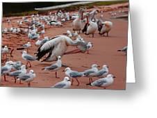 Pelicans At Pearl Beach 3.0 Greeting Card