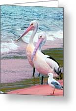 Pelicans At Pearl Beach 5.1 Greeting Card