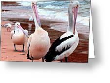 Pelicans At Pearl Beach 5.2 Greeting Card