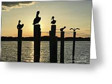 Pelicans At Sunset Greeting Card