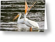 Pelicans Fishing Greeting Card
