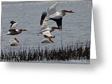 Pelicans Flight Greeting Card