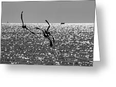 Pelicans Flying By - Black And White Greeting Card