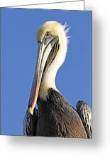 Pelican's Good Side Greeting Card