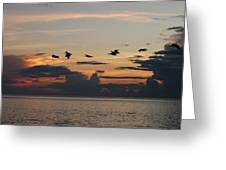 Pelicans In Flight At Dawn Greeting Card
