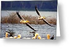 Pelicans In Flight Greeting Card