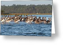 Pelicans, Murrells Inlet Sc Greeting Card