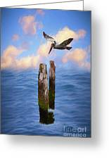 Pelicans On The Outer Banks Of North Carolina Ap Greeting Card