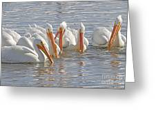 Pelicans On The Prowl Greeting Card