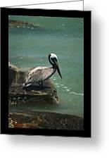 Pelican's Perch Greeting Card