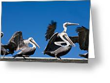 Pelicans Take Flight Greeting Card