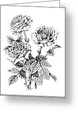 Pen And Ink Roses Greeting Card