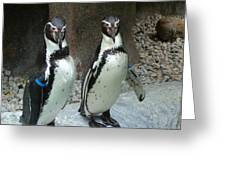Penguin Duo Greeting Card