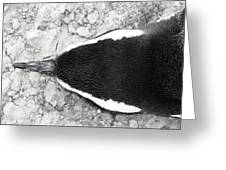 Penguin From Above Greeting Card