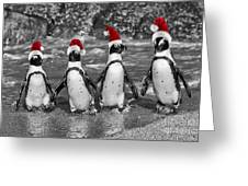 Penguins With Santa Claus Caps Greeting Card