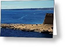 Peninsula De Valdez Greeting Card