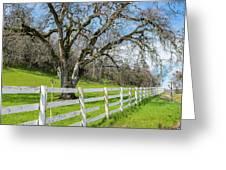 Penn Valley Tree Greeting Card