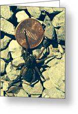 Penny Pinching Spider Greeting Card