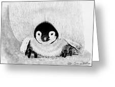 Penquin Chick Greeting Card