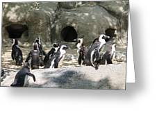 Penquins Homes Greeting Card
