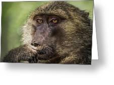Pensive Baboon Greeting Card