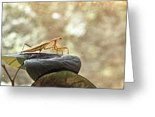 Pensive Mantis Greeting Card