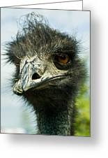 Pensive Ostrich Greeting Card
