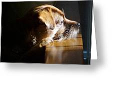 Pensive Puppy Greeting Card