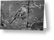 Pensive Rest Greeting Card