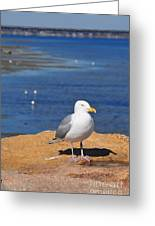Pensive Seagull Greeting Card