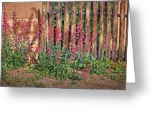 Penstemon - Adobe - Fence Greeting Card