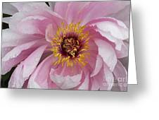 Peonie In Pink Greeting Card