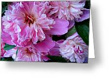 Peonies Under The Weather Greeting Card