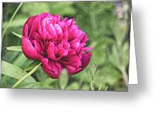 Peony 1162 Textured Greeting Card