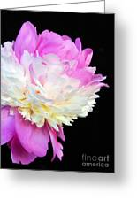 peony 16 Double Pink Peony Macro Greeting Card