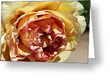 peony 19 Pale Yellow and Pink Tree Peony macro Greeting Card