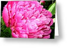 Peony And Raindrops Greeting Card