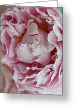 Peony Close Up Greeting Card