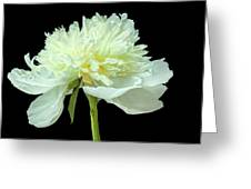 Peony Expression Of Tenderness Greeting Card